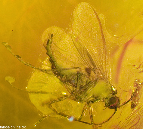 Insects in amber...U23a